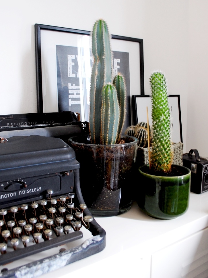 zieke cactus, cactus, kamerplant, planten, plantstyling
