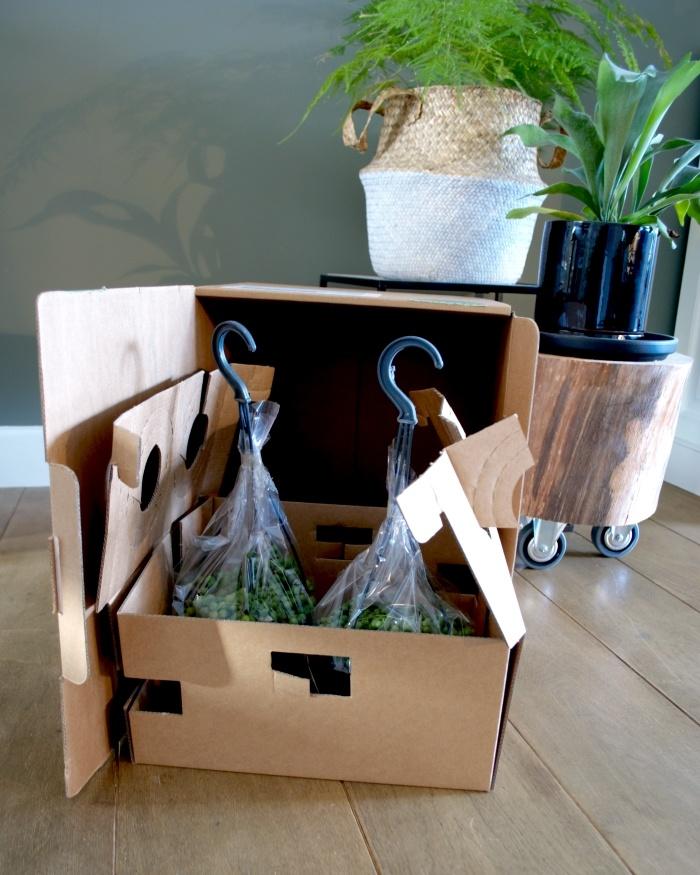 planten bestellen online, asparagus, herstshoorn, plantstyling, kamerplanten, planten
