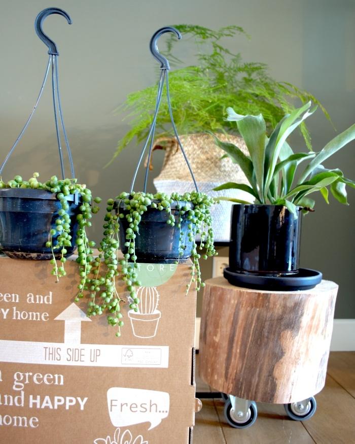 planten, asparagus, herstshoorn, erwtenplant, plantstyling, kamerplanten, planten