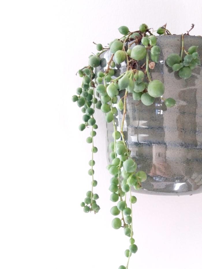 planten, senecio rowleyanus, erwtenplant, plantstyling, kamerplanten, planten, hangplant