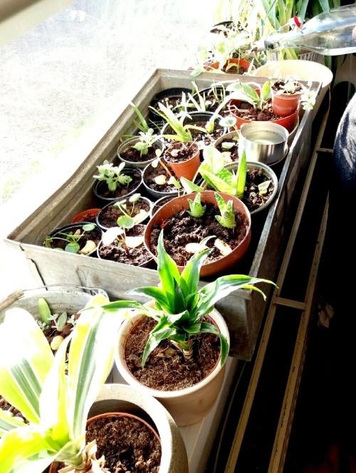 stekjes, plantenziekenhuis, plantenasiel