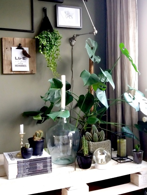 Monstera deliciosa, gatenplant, mevrouw monstera, plantstyling, plantinspiratie, kamerplanten, urban jungle