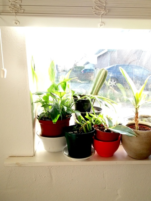 plantjes, kamerplanten, plantenziekenhuis, plantenasiel