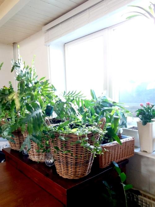 plantenziekenhuis, plantenasiel