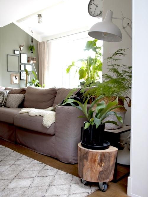 plantenhoek, hersthoorn, asparagus, kamerplant, urbanjungle, kerstboom eruit, goedkope plant erin