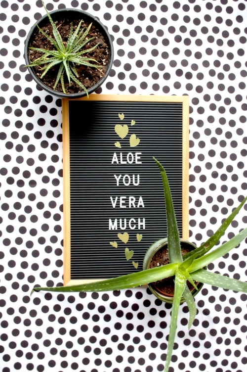 plantenquotes, plantquotes, plants, planten, kamerplanten, aloe vera