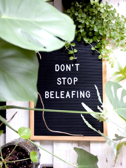 etterbord, letterboard, letterbordquotes, quotes, plantquotes, plants, planten, kamerplanten, urbanjungle