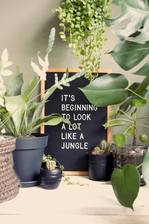 letterbord, letterboard, letterbord quotes, quotes, plantenquotes, plantquotes, plants, planten, kamerplanten, urbanjungle