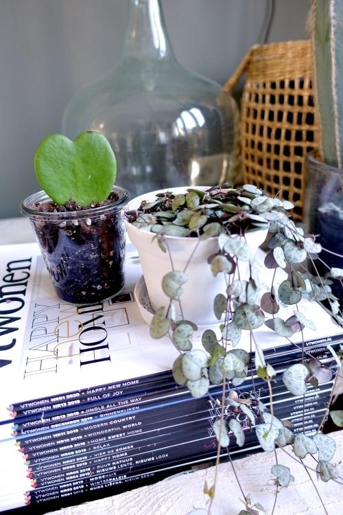 groene kneusjes box, verrassingsbox, plantenbox, planten, kamerplanten, tweedekans planten, #chinees lantaarnplantje, hoya kerri,  mevrouw monstera
