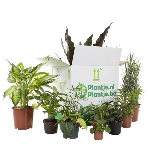groene kneusjes box, verrassingsbox, plantenbox, planten, kamerplanten, tweedekans planten, mevrouw monstera
