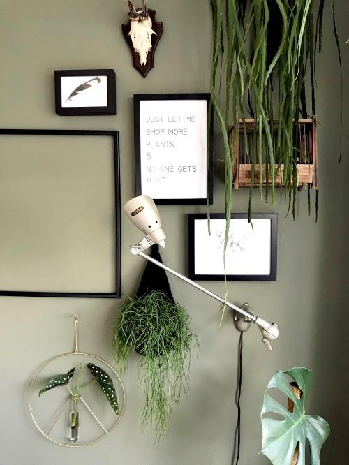 koraalcactus, rotskoraal, hangplant, kamerplant, jungleplant, urbanjungle, plantstyling