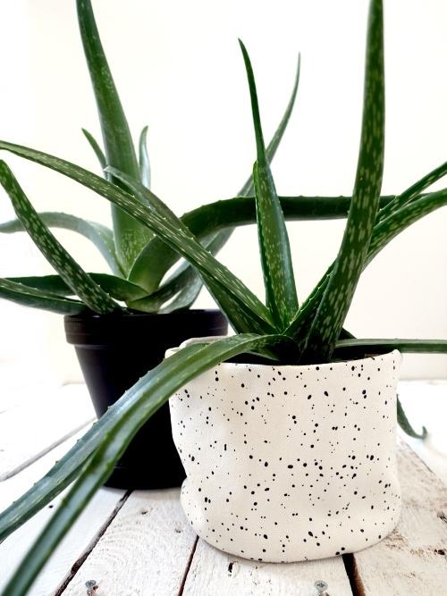 aloë vera, wonderplant, makkelijke kamerplant, vetplant, succulent, verzorging, stekken, geschiedenis, oorsprong