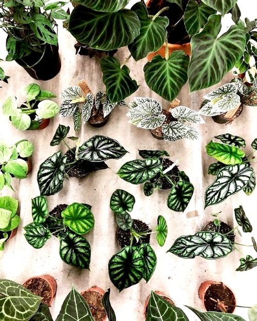 kamerplanten, webshops, online planten shoppen, plantje.nl