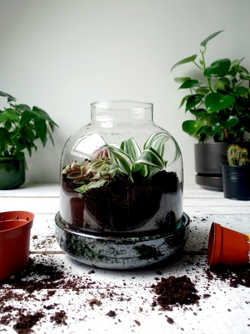 grow-it-yourself terrarium, ecosysteem, flessentuin, mini-ecosysteem, minituintje, zelfvoorzienend, diy,