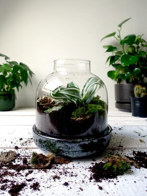 grow-it-yourself terrarium, ecosysteem, flessentuin, mini-ecosysteem, minituintje, zelfvoorzienend, diy,