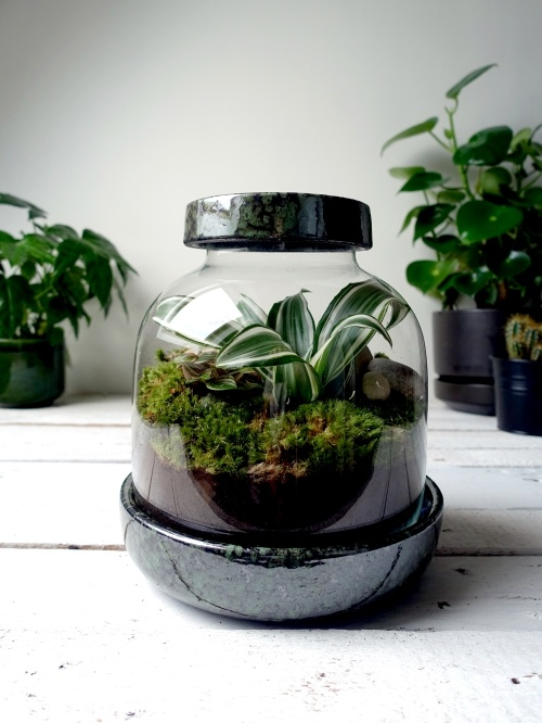 Grow-it-yourself terrarium