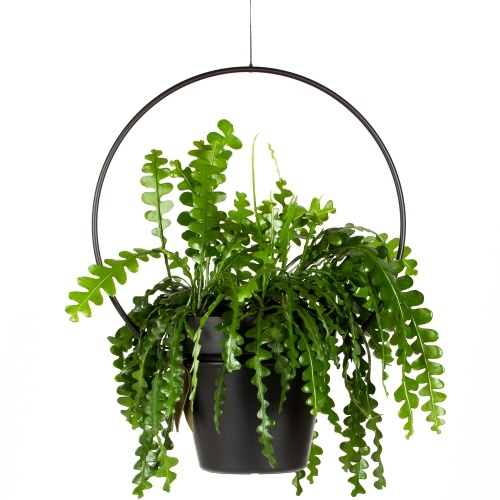 plantenhanger voor binnen, happycircle, hangpot, hangplant, plantstyling, trendy