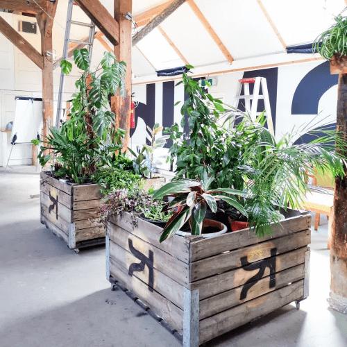 GoJUngle, plantstyling, plantstylist, urbanjungle, veilingkisten