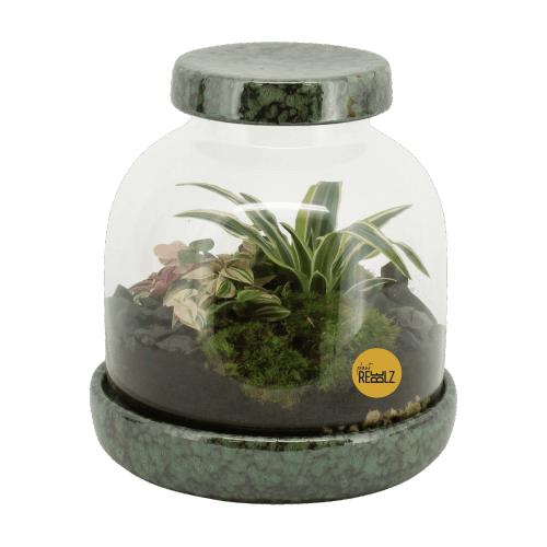 terrarium, ecosysteem, flessentuin, mini-ecosysteem, minituintje, zelfvoorzienend, diy,