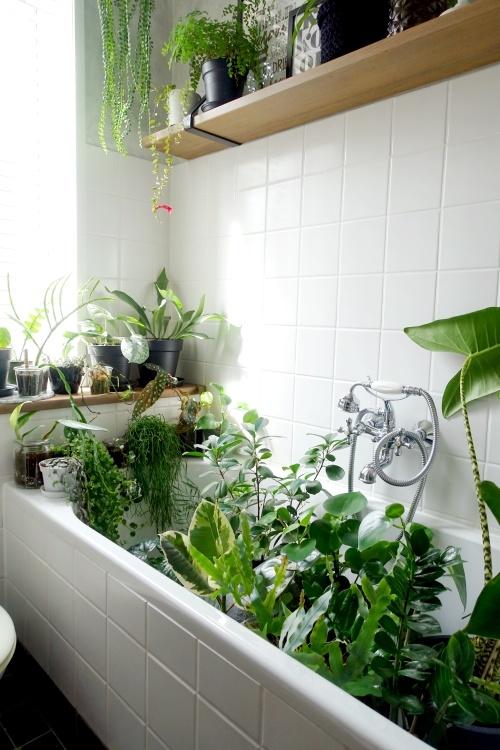 kamerplanten, watergeven, vakantie, tips, badkamer